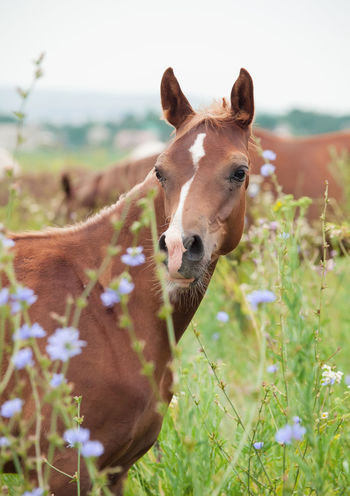 Animal Head  Animal Themes Close-up Day Domestic Animals Grass Horse Livestock Looking At Camera Mammal Nature No People One Animal Outdoors Portrait Sky