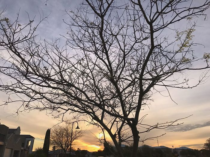 Sunset Bare Tree Tree Sky Branch Beauty In Nature Nature Low Angle View Cloud - Sky No People Outdoors Silhouette Landscape Scenics Building Exterior Day City Taking Photos