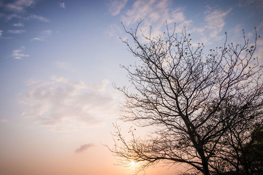 profound mind. Bare Tree Beauty In Nature Branch Cloud - Sky Day Idyllic Low Angle View Nature No People Non-urban Scene Orange Color Outdoors Plant Scenics - Nature Silhouette Sky Sunset Tranquil Scene Tranquility Tree