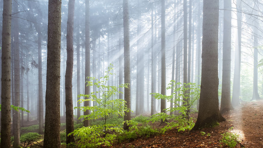 EyeEmNewHere Beauty In Nature Branch Day Fog Forest Growth Landscape Leaf Nature No People Outdoors Plant Scenics Tranquil Scene Tranquility Tree Tree Trunk