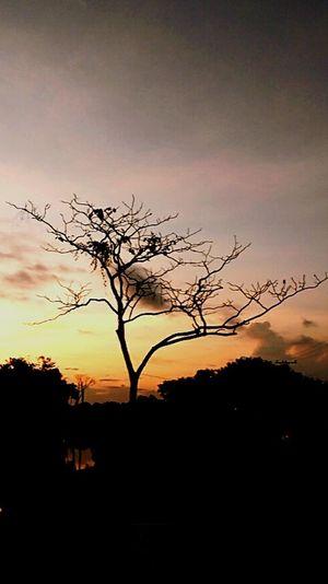 Acre Amazonia Natureza Arvore Céu Por Do Sol UFAC First Eyeem Photo