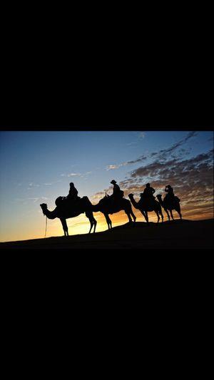 Marrakech Camello Silhouette Sunset Marruecos Desierto Paisaje