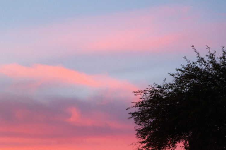 Sunset Sky Sunset Cloud - Sky Beauty In Nature Tree Plant Nature Tranquility Scenics - Nature Romantic Sky Dusk Purple Silhouette Idyllic Low Angle View Outdoors Tranquil Scene No People Orange Color Pink Color Growth Day