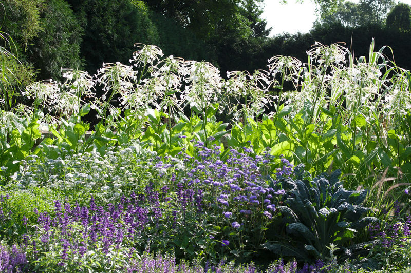 Flowerbed Plant
