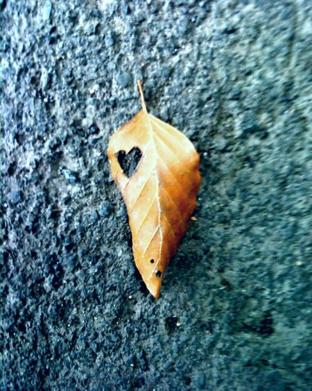 | heart2heart | ... and no, i didn't cut the heart with a scissors into the leaf. Found it like that in the middle of a forest. Art Arts ArtWork Artsy Artstagram Leaf Heart Hearts HeartToheart Herz Nature Hello World Hanging Out Enjoying Life Eyem Best Edits EyeEm Nature Lover Natureporn Naturephotography Nature_perfection Naturelovers Nature_collection Wald Forest Stille Eyem Gallery