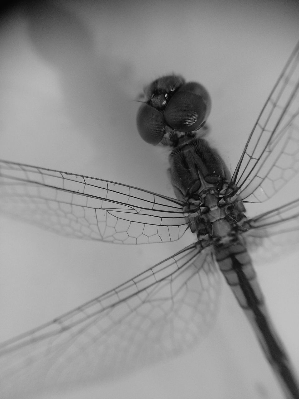 insect, animal themes, close-up, animals in the wild, outdoors, no people, one animal, nature, day, sky