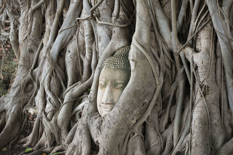 Buddha carved on banyan tree