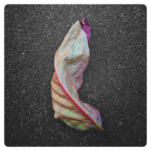 Showcase April Leaf Hanging Out