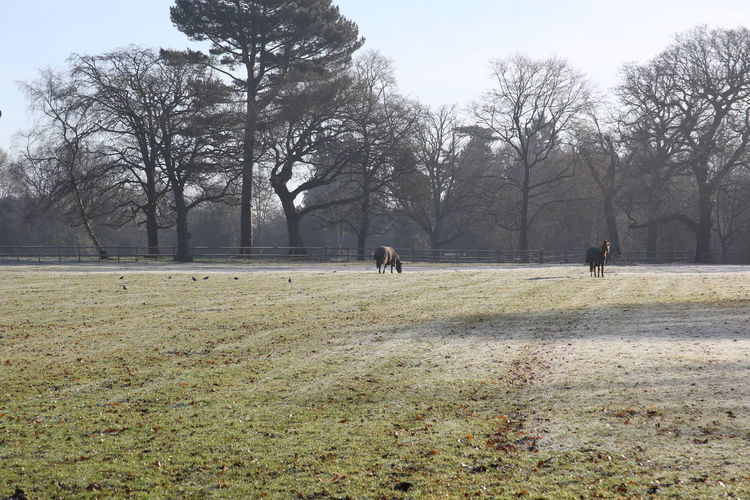 Day Frosty Field Grass Horses Nature Outdoors Sky Sunny Surrey Countryside Tree Winter Morning