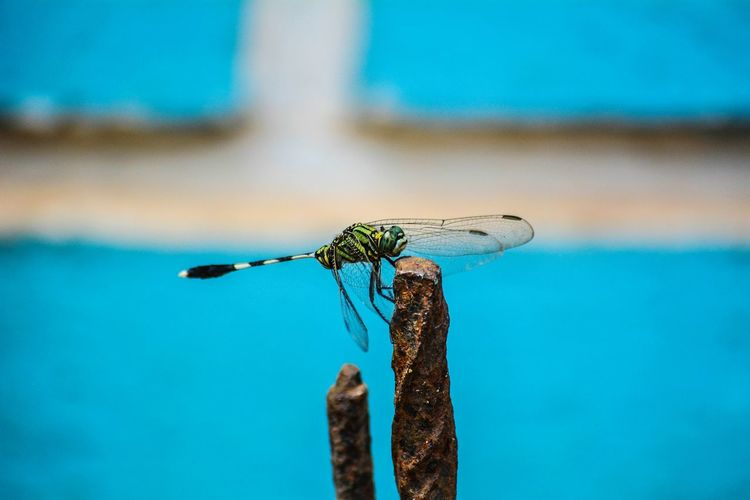 Close-up of dragonfly on rusty iron rod