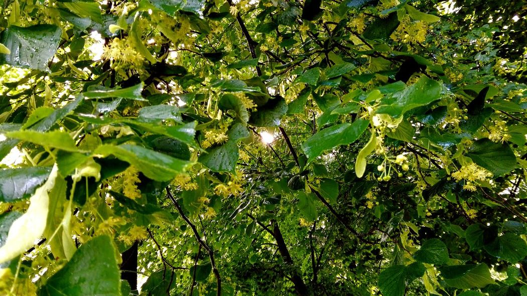 Taking Photos Check This Out Essence Of Summer How's The Weather Today? See What I See Spring 2016 June 2016 The Places I've Been Today Nordpark Green Green Green!  Green Leaves Take A Walk Sun Springtime Evening Sun Tree_collection  TreePorn