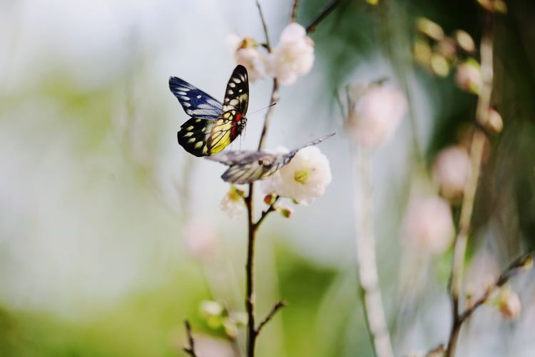 Insect Flower One Animal Animal Themes Nature Animals In The Wild Close-up Fragility Butterfly - Insect Beauty In Nature Plant Day Growth Outdoors Freshness Animal Wildlife No People Pollination Flower Head