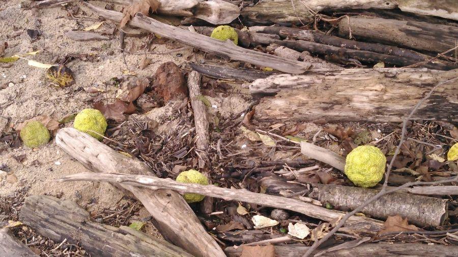 Crab Apples A New Beginning Beach Close-up