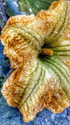 Taking Photos Photo Editing Pumpkin Blossom Flower