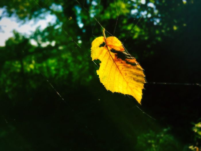 Colorful leaf in a spider web Health Thoughtful Time Happiness Psychology Sun October Forest Orange Love Light Morning Spider Web Colorful Leaf Belief Faith Life Sorrow Grief Hope Season  Autumn Fall Nature Growth Selective Focus