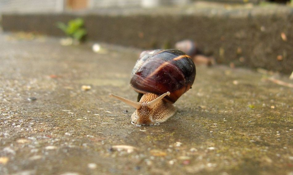 Animal Shell Animal Themes Animal Wildlife Animals In The Wild Close-up Day Fragility Gastropod Natrualbeauty Nature Nature Photography Nature_collection No People One Animal Outdoors Snail Wildlife