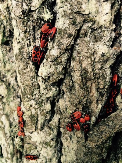 Tree Red Insect