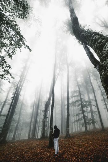 Man Standing In Forest