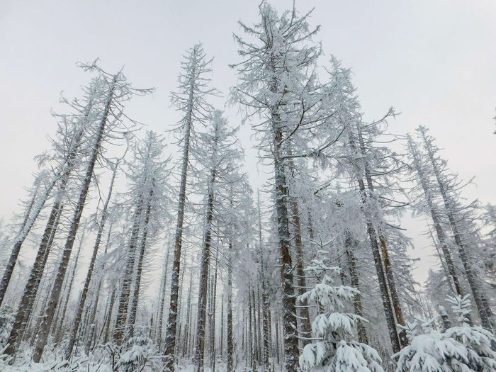 EyeEm Best Shots Tree Pine Tree Snow Pinaceae Winter Cold Temperature Nature Forest WoodLand No People Fir Tree Snowcapped Mountain Outdoors Landscape Beauty In Nature Mountain Spruce Tree Day Snowflake Backgrounds Pattern Ice