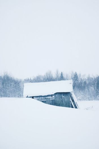 EyeEm Selects Snow Winter Cold Temperature Copy Space Sky Nature No People White Color Day Tranquility Tranquil Scene Covering Plant Tree Scenics - Nature Beauty In Nature Frozen Field Snowing