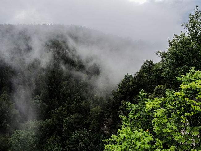 Adventure Beauty In Nature Climbing Climbing A Mountain Coolpix7800 Fog Foggy Forest Growth Hiking Hiking Trail Hikingadventures Mountain Nature Nature Photography Nature_collection Nikon Outdoor Photography Outdoors Outdoors Photograpghy  Scenics Tranquil Scene Tranquility Tree Weather