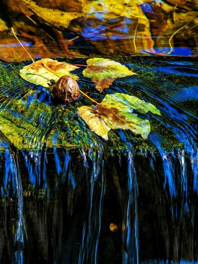 Leaf Photography Water Stream - Flowing Water Multi Colored Backgrounds Close-up Getting Inspired Wilderness Detail Abstract Expressionism Leaf 🍂 EyeEm Gallery Exceptional Photography EyeEm Best Shots Tranquil Scene Artistic Expression My Unique Style Leaf Pattern Beauty In Nature EyeEm Nature Lover Sunlight Leaf Vein Outdoors