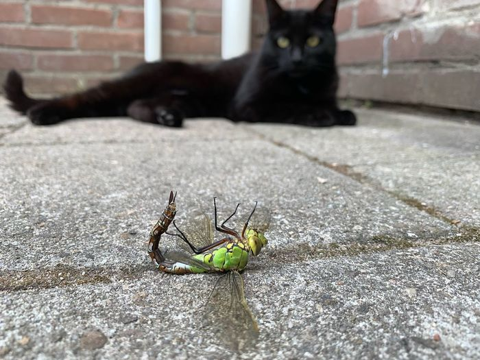 Predator meets