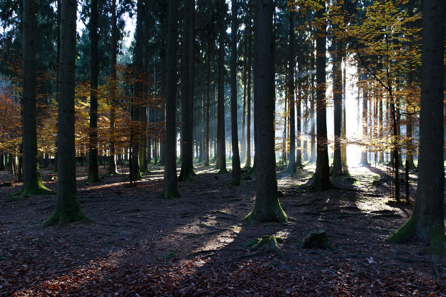 Sundown in the Wood - Park in Poing. Absence Autumn Bavaria Beautifull Bench Change Colors Colors Of Autumn Empty Footpath Forest GERMANY🇩🇪DEUTSCHERLAND@ Leading Narrow Outdoor Outdoors Park Park - Man Made Space Poing Shadow The Way Forward Tree Tree Trunk Treelined WoodLand