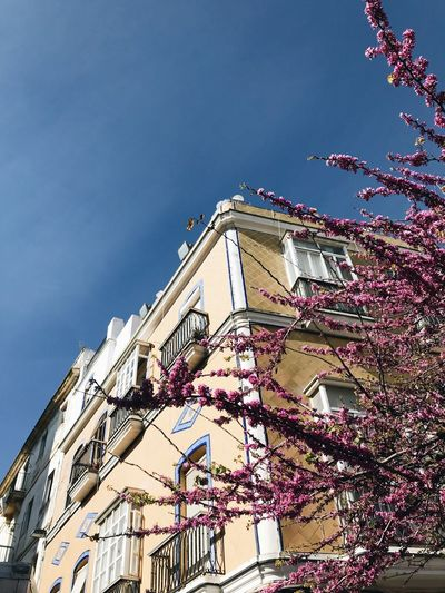 Architecture Blossom Branch Building Building Exterior Built Structure Cherry Blossom Cherry Tree Clear Sky Day Flower Flowering Plant Fragility Growth Low Angle View Nature No People Outdoors Pink Color Plant Sky Springtime Tree