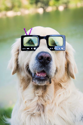 Close-up of dog wearing 3-d glasses