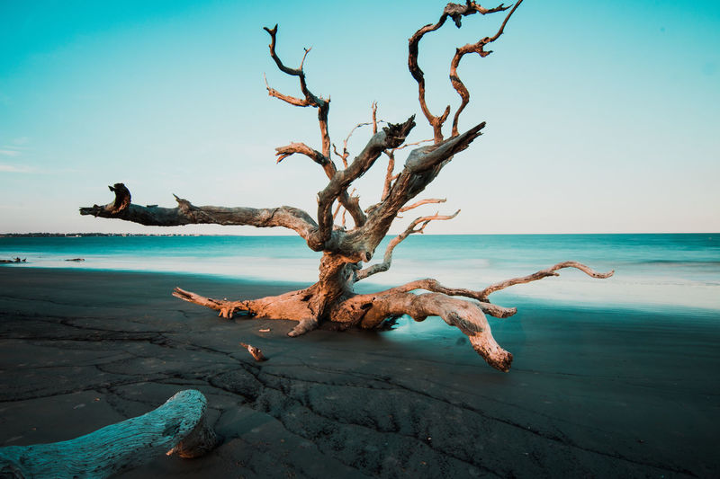 EyeEm Selects Sea Tree Water Beach Beauty Bare Tree Sky Horizon Over Water Landscape Driftwood Sandy Beach Dead Plant Poster Postcard Surreal Dried Plant Gateway Print Namib Desert Banner - Sign Fallen Tree Wilted Plant Dried Mysterious Wilted Billboard Printing Out Advertisement Engraved Image