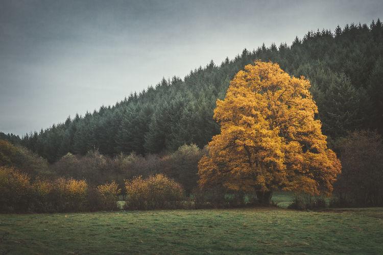 burgandy - France - 2016 ©sebastien.rossi Bourgogne France Autumn Burgandy Coniferous Tree Forest Green Color Landscape Tree