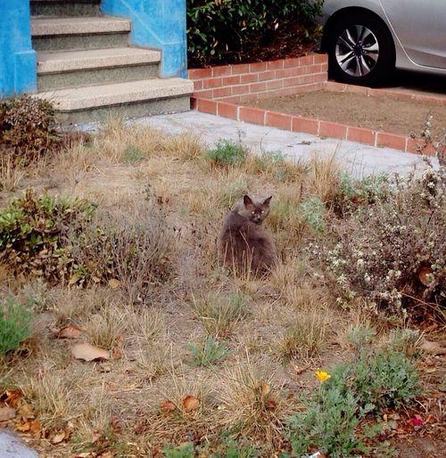 Cat Taking Photos Neighbor Furry Friends
