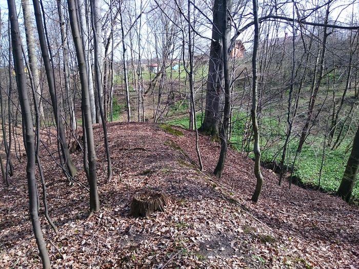 Forest Cieszyn Kwiecień