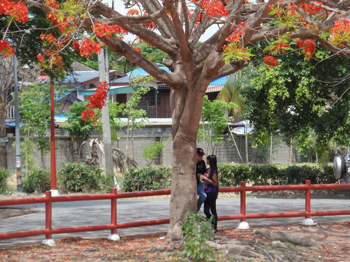 Beauty In Nature Casual Clothing Day Full Length Growth Leisure Activity Lifestyles Nature Outdoors Park Park - Man Made Space Plant Tree Tree Trunk