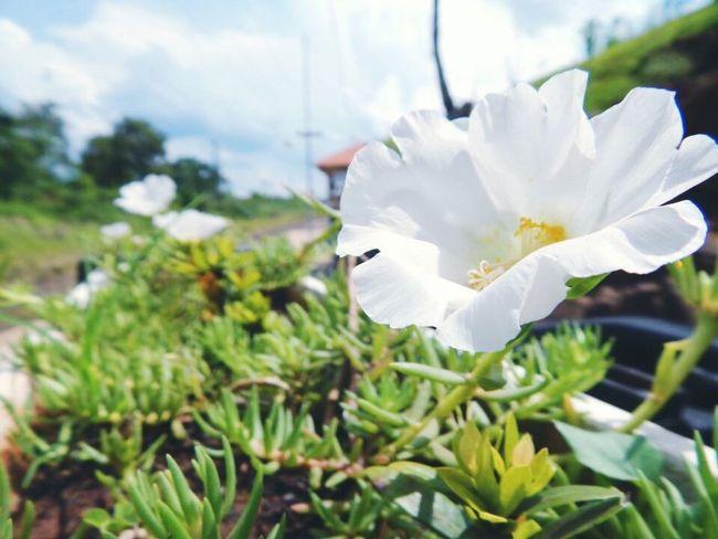 Flower Beauty In Nature Single Flower