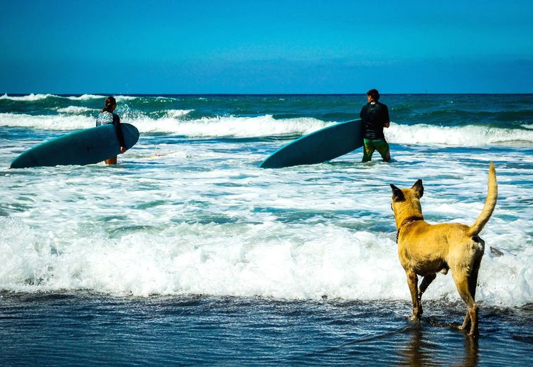 Dog gonna surf EyeEmNewHere Philippines La Union, Philippines Blue Beachphotography Dog Surfing Water Wave Pets Friendship Sea Beach Dog Sand Motion Sky Ocean Surf Surfer Surfboard Splashing Shore Summer Exploratorium