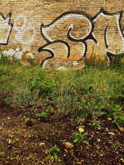 Graffiti on grass
