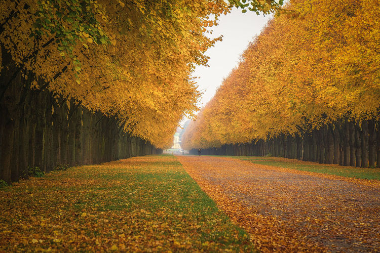 Trees in row at public park during autumn