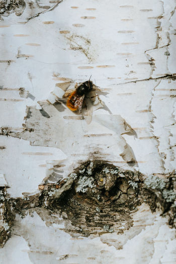Close-up of bee on white wall