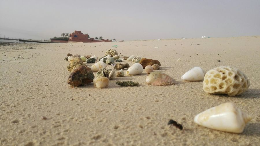 Stones And Shells On Sand