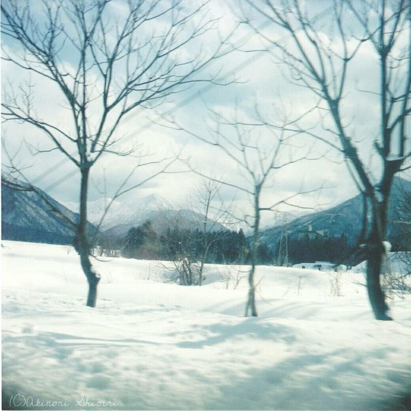 EyeEm Gallery EyeEm Nature Lover Taking Photos Snow WhiteCollection Filmcamera Baron Six Fujifilm Nigata Japan