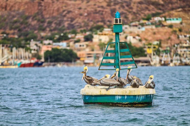 Sea port, fishing boats, ships and ships in the fishing port of Guaymas, Sonora, Mexico. Old boats sink into the sea before their rusty metal shell. This port or city of Guaymas is located in the Gulf of California. Mar puerto, barcos pesqueros, buques y navíos en en puerto pesquero de Guaymas, Sonora, Mexico. Viejos botes se hunden en el mar ante su carcasa de metal oxidado. Este puerto o ciudad de Guaymas se encuentra en el Golfo de California . Guaymas Fishing Fishing Boat Ships Bird Photography Marina Mexico Old Boats Sink Old Boats Sink Plant Sonora Barco Birds Boats Boats Sink Day Daylight Hill Outdoors Pelicans Port Aventura Rusty Metal Sea Seagull