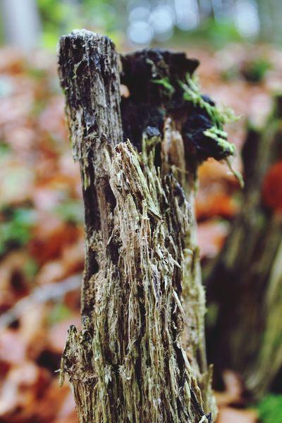 Relaxing Herbst Baum Natur