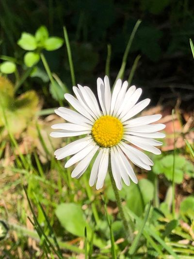 Frühling ist da! Flower Flowering Plant Plant Freshness Fragility Vulnerability  Petal