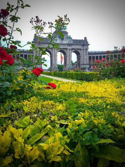 Architecture Belgium Blooming Blossom Botany Brussels Bruxelles City Park Flower Flowers Garden Jubelpark Monument Multi Colored Museum No People Parc Du Cinquantenaire Roses Sculpture Urban Park Yellow