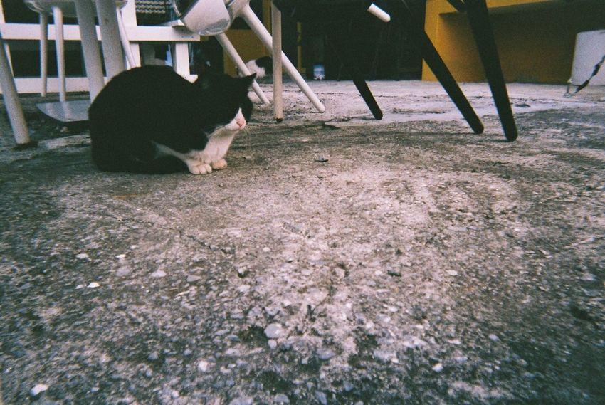 島のネコちゃん② Okinawa OKINAWA, JAPAN Film Photography Cat