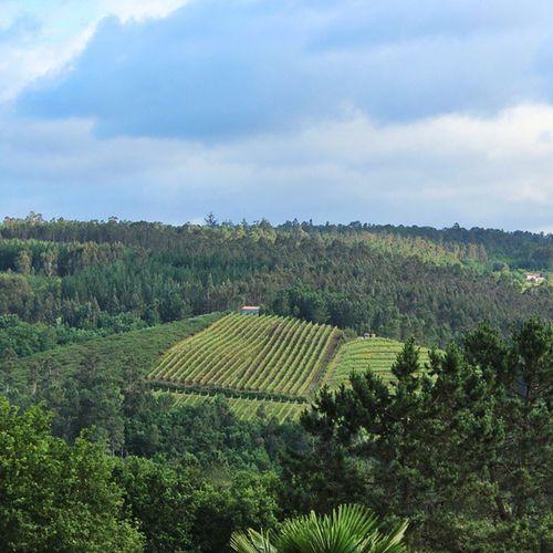 La edicion de Invierno del Wineuptour está llegando a su fin y yo ya ando preparando la edición de Primavera . Como todos los años desde 2010, visita obligada a Galicia .