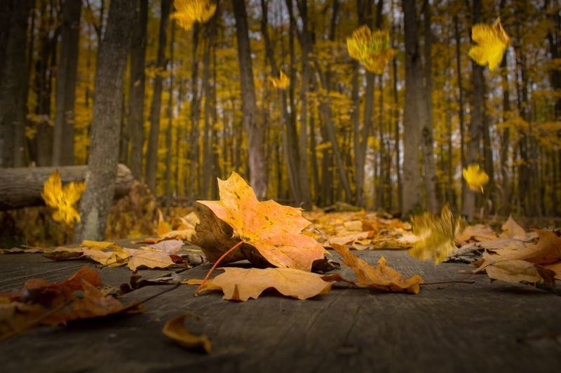 Autumn leaves fallen on tree in forest