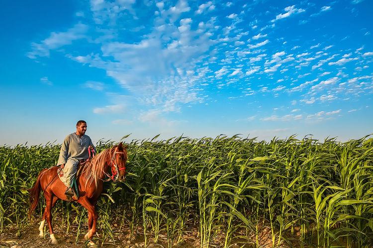Man riding arabian horse by plants on field